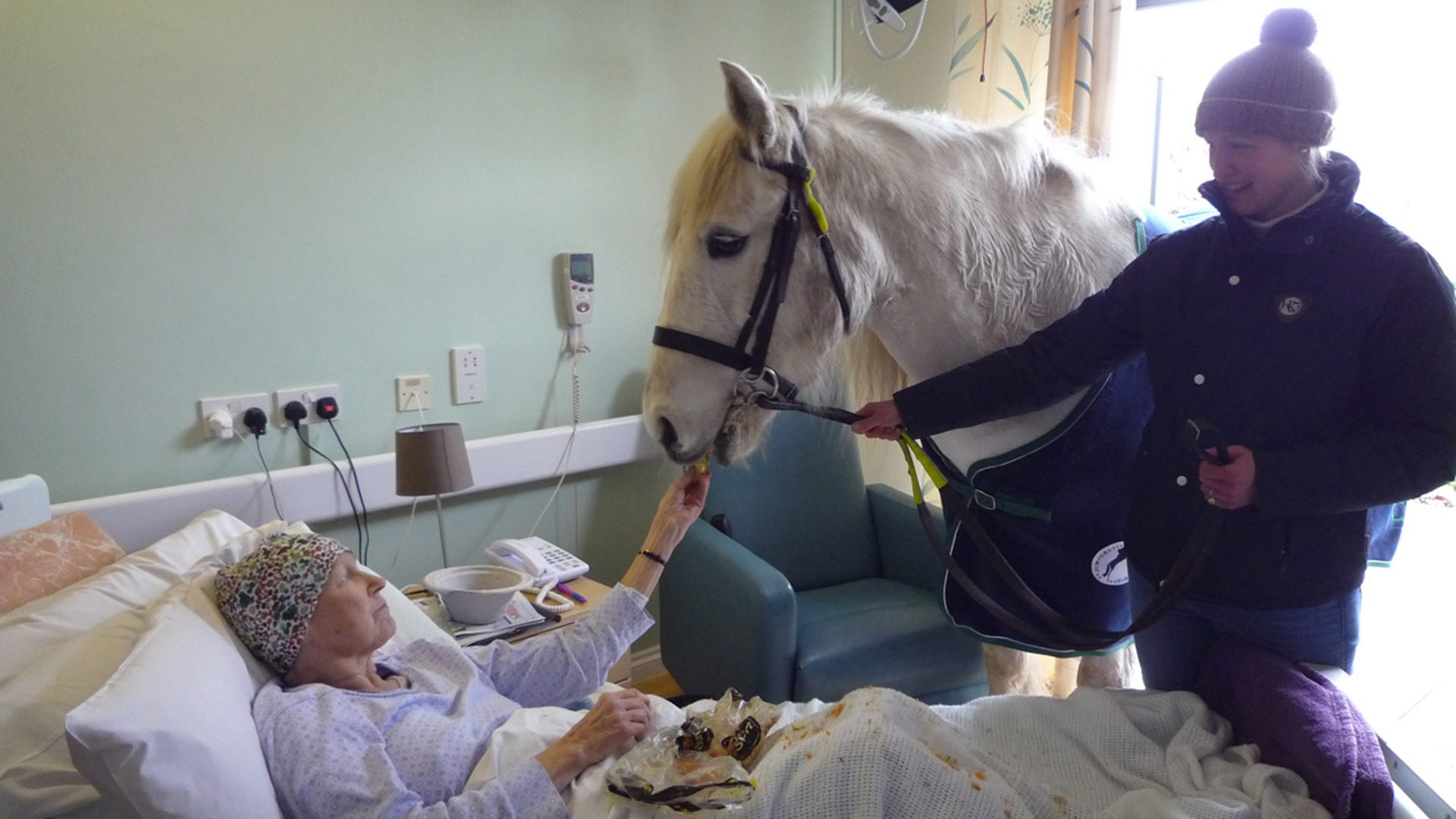 Horse visiting a patient in the Inpatient Unit at Winsley